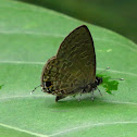 Common Line Blue
