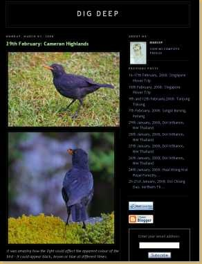 bird-watching-in-cameron-highlands-dig-deep