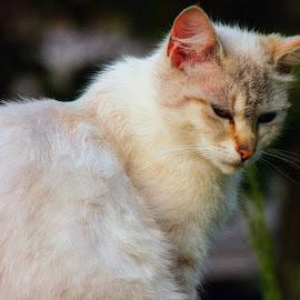 by Slavko Marčac - Animals - Cats Portraits