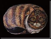 gatto-bello