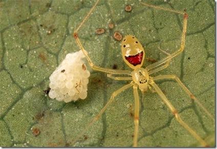 spider-guarding-eggs-683251-ga