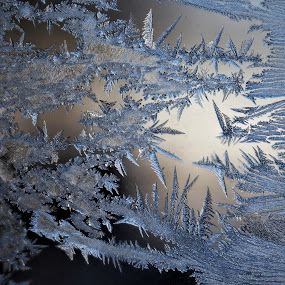 Crystal Art by RichandCheryl Shaffer - Nature Up Close Other Natural Objects ( #winter, # frozen, #crystals,  )