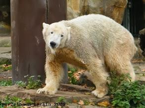 Photo: Knut mit Schiefnase ;-)