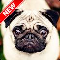 Pug Wallpaper icon