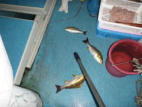 Photo: 毎回、サメの餌食ではないみたいです。 トリプルキャッチ!