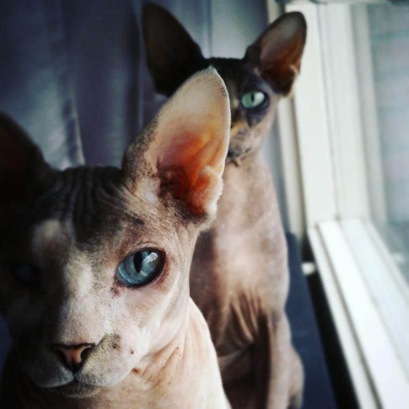 catmom naomi verhalen van echte catmoms catmom NL