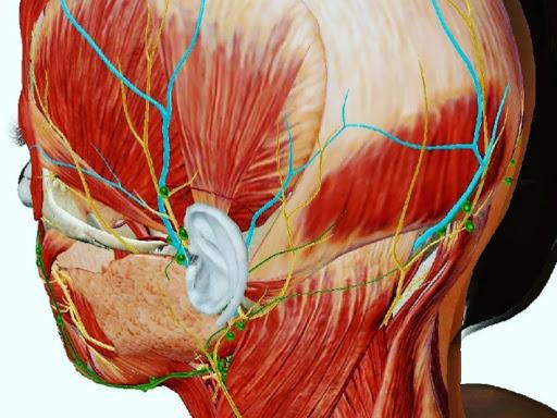 片頭痛(又は筋収縮性頭痛)