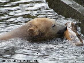 Photo: Egal, Knut badet weiter ;-)