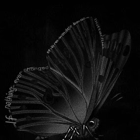 Butterfly by Heather G - Typography Quotes & Sentences ( quotesandsayings blackandwhite )