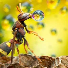 Wasp 150913A by Carrot Lim - Animals Insects & Spiders ( macro, wasp, insect )