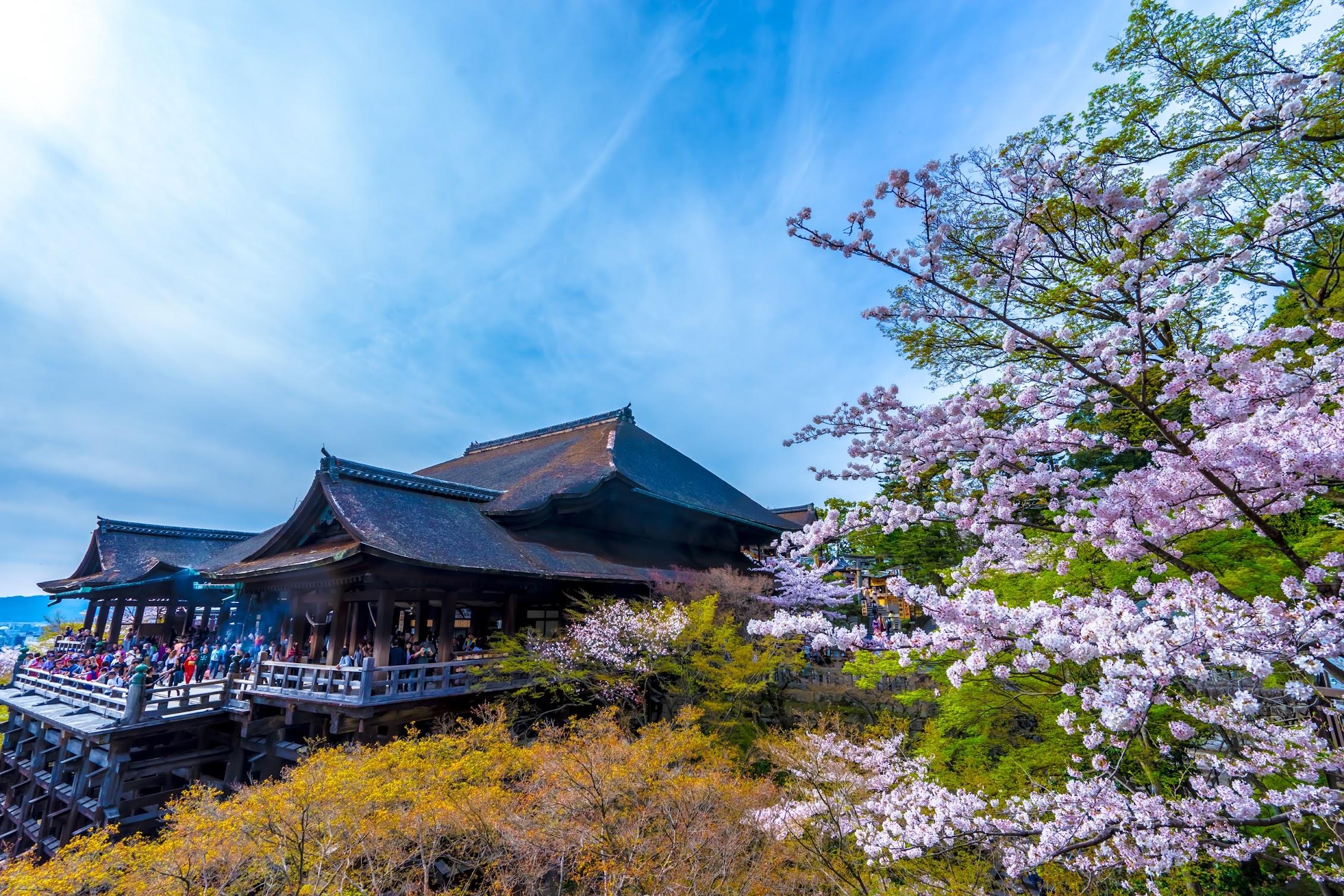 京都 清水寺 桜3