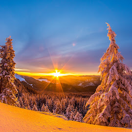Orange sunrise by Geo Cozma - Landscapes Forests ( wide angle, snow, pine trees, sunrise, golden hour )