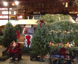 Photo: Christmas trees