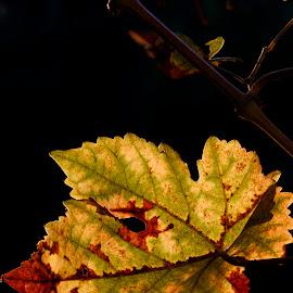 by Pavel Vlček - Nature Up Close Leaves & Grasses