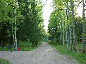 Photo: Erdő a város közepén