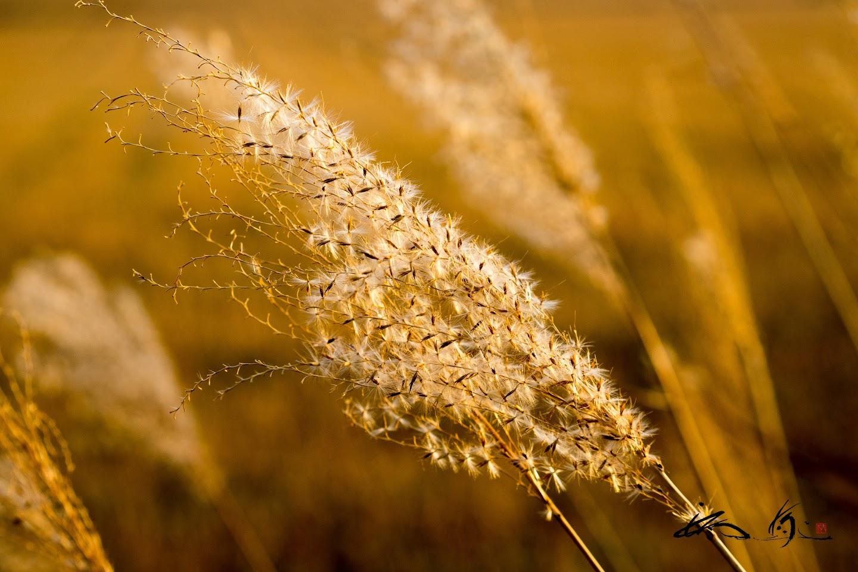 風に舞い踊る銀白の羽毛。。。
