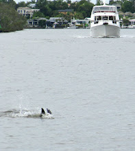 Photo: Year 2 Day 237 - A Pair of Dolly the Dolphins at Dolphin Corner