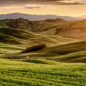 Sunset in Tuscany by Maurizio Martini - Landscapes Mountains & Hills ( countryside, hills, tuscany, seasonal, italian, silhouette, yellow, travel, sky, nature, tree, autumn, light, hill, orange, grass, agriculture, horizon, forest, sunlight, rural, country, environment, season, scene, view, plant, beauty, landscape, sun, panorama, farm, hillside, evening, italy, clouds, green, beautiful, scenic, field, fog, sunset, peace, outdoor, background, fall, meadow, summer, sunrise, scenery )