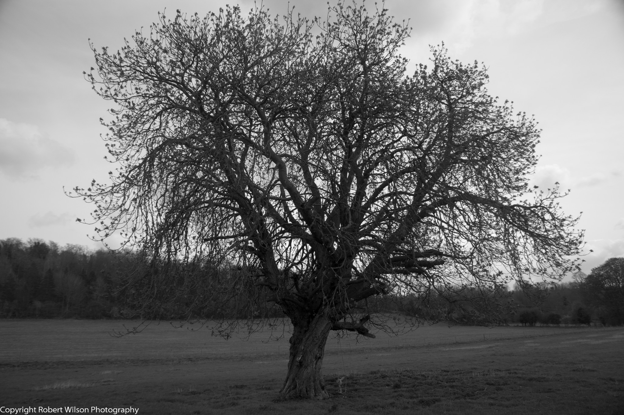 Photo: Lone Tree in the Hambleden Valley