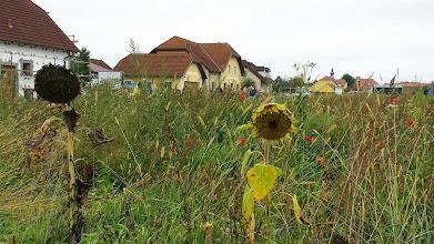 Photo: Idylle in Etsdorf. Dort wurde bei Pfarrer Winter (er war einstens Kaplan in Stockerau) Mittagspasue gemacht.