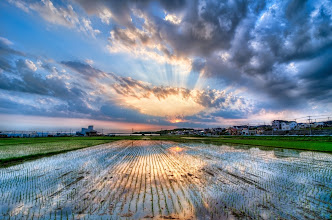 Photo: A late May sunset casts its beams over rice fields in Chiba Prefecture, Japan
