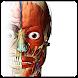 人体解剖学のアトラス簡単。
