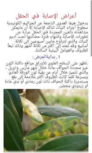 Olives 2 1.0 screenshots 4