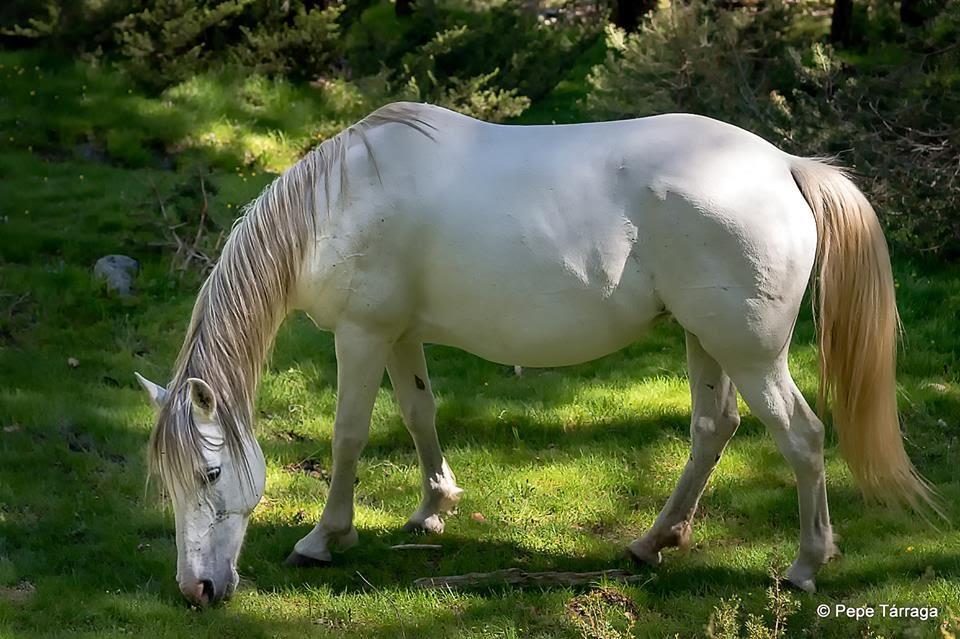 La imagen puede contener: caballo, hierba, exterior y naturaleza