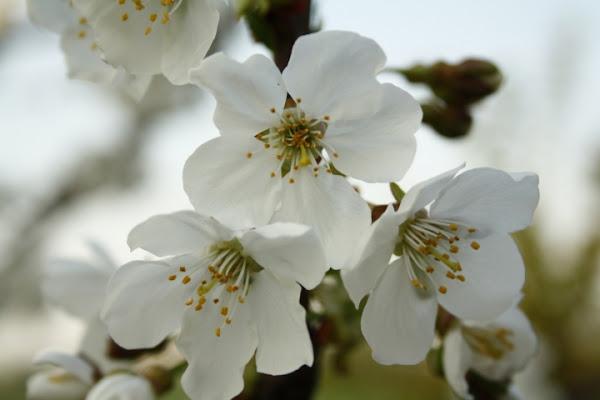 Esplosione di Primavera di danifeb