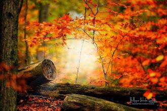 Photo: Les Forestières