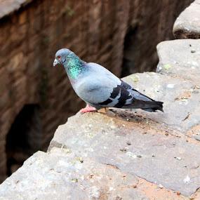 by Shafaly Sharma - Animals Birds ( pwctaggedbirds )