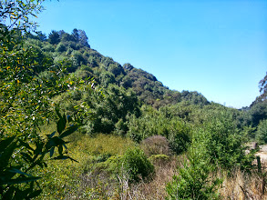 Photo: The only eucalypti left are on the ridge, across Grizzly Peak.