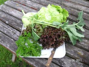 Photo: frisch vom Gemüsegarten