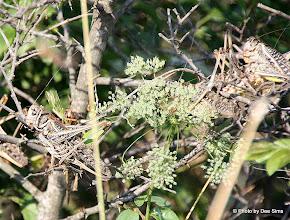 Photo: Day 97 - Locusts