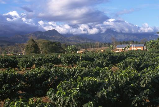 Exploring Malawi as a coffee origin