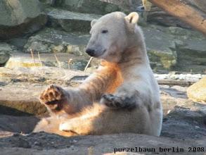 Photo: Immer mit der Ruhe, meint Knut ;-)