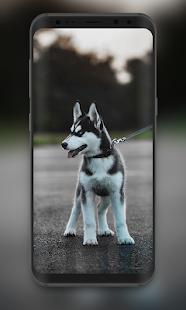 Cute Dogs Wallpaper Cute Puppy Wallpaper Apps No Google Play