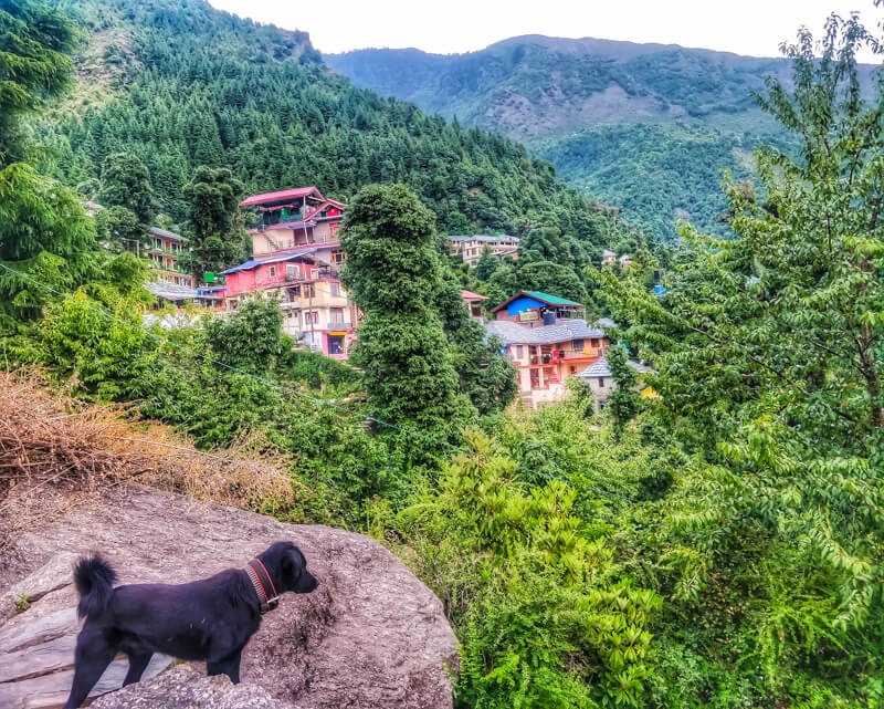 dog+houses+bhagsunag+beautiful+villages+in+himachal+pradesh