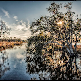 Silver Afternoon by Ken Wagner - Nature Up Close Trees & Bushes ( water, grasses, sunstars, nature, swamps, reflections, trees, nikon, back bay )
