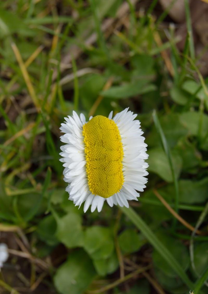 """Una """"nuova"""" primavera di XaBaRaS"""