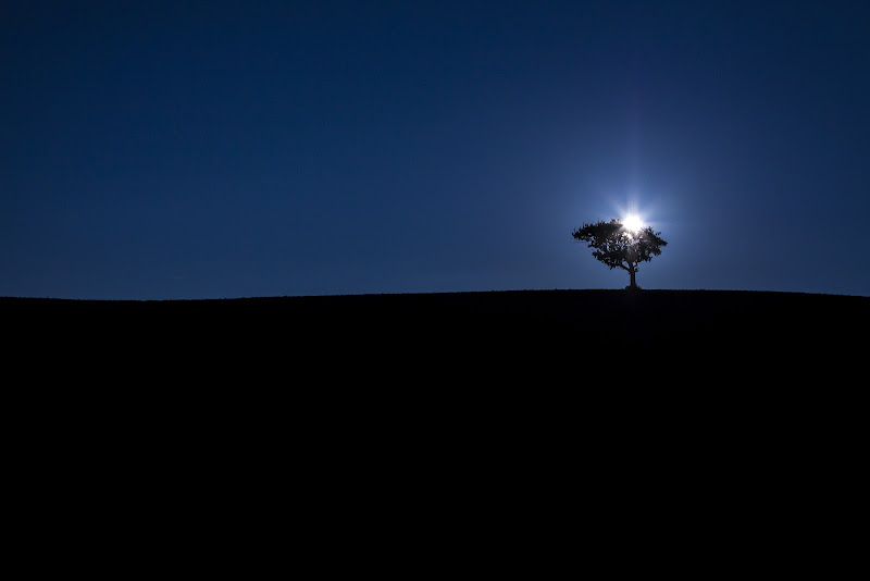 L'albero dei miracoli di meo