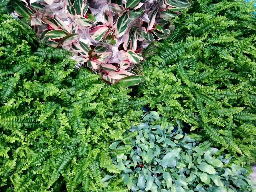 Plantas para jardín vertical en Mallorca