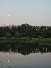 Photo: Moon reflected in lake with the trees at Carriage Hill Metropark in Dayton, Ohio.
