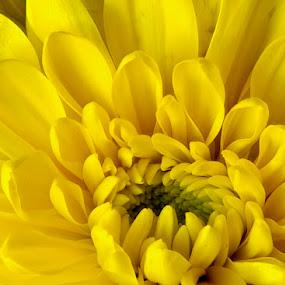 by Jane Fourie - Flowers Single Flower (  )