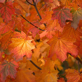 by Al Duke - Nature Up Close Leaves & Grasses