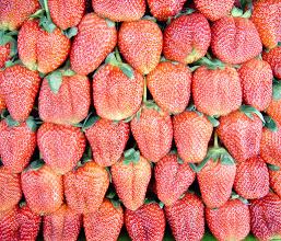 Photo: Strawberries