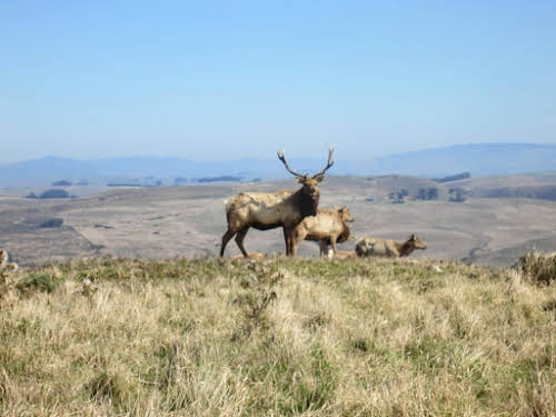 What to Do in Northern California: Attractions & Travel Guide // Elk, Point Reyes National Park