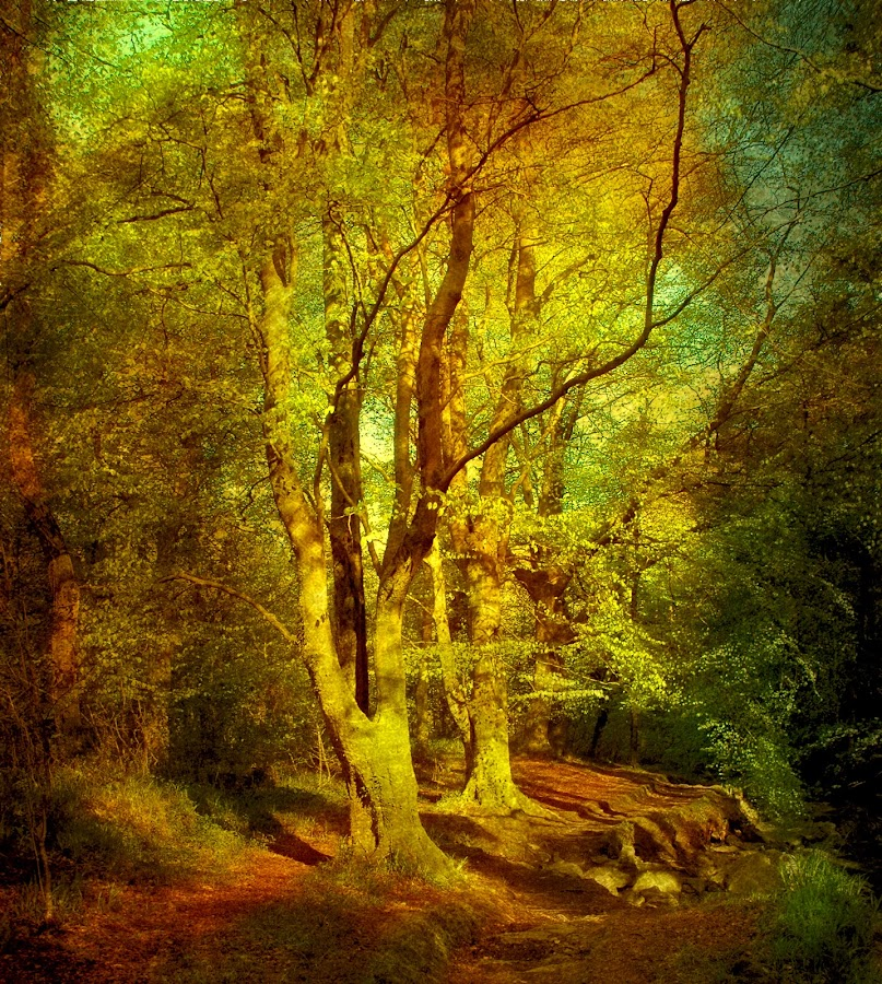 In The Green by CLINT HUDSON - Landscapes Forests
