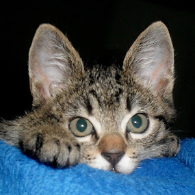 so cute by Gordana Djokic - Animals - Cats Kittens ( cats, kitten, cute, small, animal )