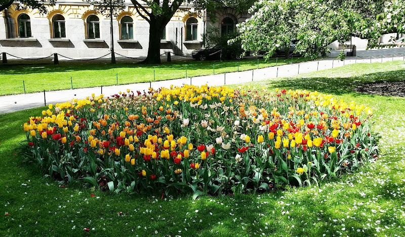 Tulipani a Helsinki di CB Photographer
